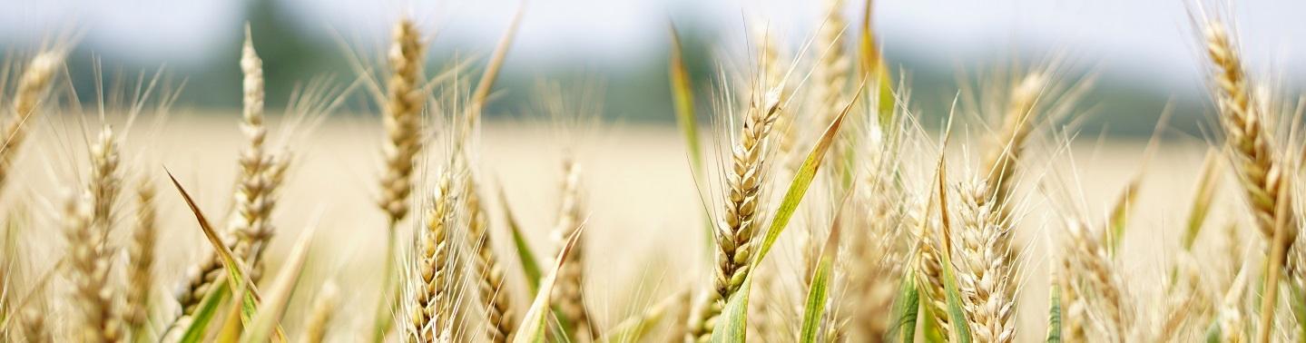 Food Industry.jpg